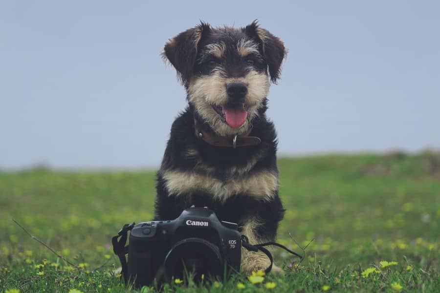 Dog with a Canon camera on a grass field